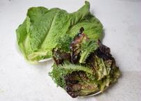 【表参道/Omotesando Pick Up】茨城県 シモタファームのサラダ用野菜MIX Salad Mix  from Shimota Farm in Ibaraki prefecture
