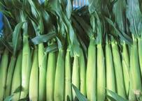 【表参道/Omotesando Pick Up】山梨県 53ファームの皮付きヤングコーン Young corn from 53 farm in Yamanashi Prefecture