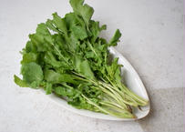 【表参道/Omotesando Pick Up】千葉県 自然農園TOMのルッコラ Rocket (arugula) from Tom-san in Chiba prefecture