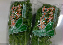 サラダ野菜 ワサビ菜