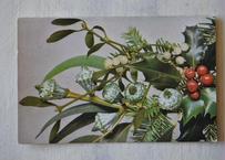 ヤドリギ やどりぎ アンティークポストカード 針葉樹とヒイラギ