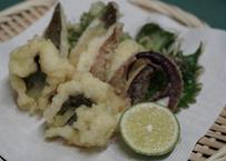 【俺が選んだ】天ぷらにはこの魚種!セット【限定20】