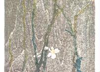 小泉 琢瑞『冬桜』