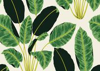 壁紙シール2.5M|【キューバの葉っぱ】