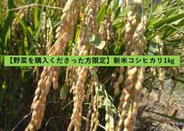 【野菜を購入くださった方限定】新米コシヒカリ(白米) 1㎏