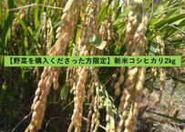【野菜を購入くださった方限定】新米コシヒカリ(白米) 2㎏