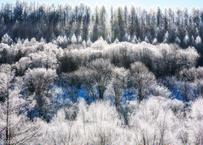 【№27】凍える光の森①
