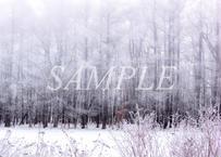 【№34】極寒の霧の朝に①