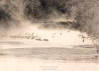 【№67】タンチョウと霧氷と気嵐⑤