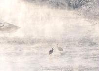 【№62】極寒の川の中に佇む親子