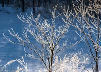 【№22】霧氷とダイヤモンドダスト 横②