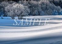 【№11】白い草原に伸びる青い影