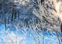 【№21】霧氷とダイヤモンドダスト 横①