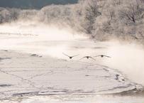 【№54】タンチョウと霧氷と気嵐③