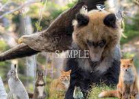 【№8】東北海道の野生動物たち