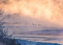 【№66】タンチョウと霧氷と気嵐④