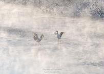 【№61】極寒の川の中のダンス