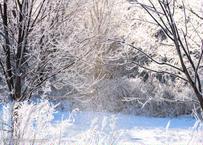 【№24】霧氷とダイヤモンドダスト 横④