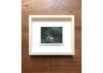 クロダミサト/インスタント写真#87     Misato Kuroda/Instant Photo #87