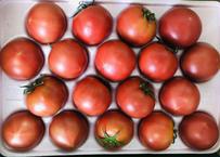 フルーツトマト1箱【消費税・送料込】
