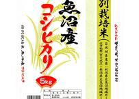魚沼産コシヒカリ 特別栽培米【5kg】