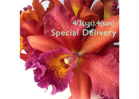 【4/3 or 4ご配送】Special Delivery