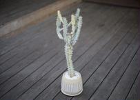 ユーフォルビア ホワイトゴースト Euphorbia lactea White Ghost