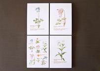 高山植物のポストカード4種セット