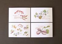 木の実のポストカード4種セット