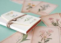 ちょっと大きめ*野の花の図鑑風メッセージカード