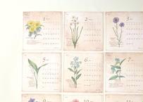 野の花図鑑風カレンダー2021