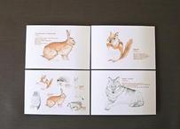 森の動物のポストカード4種セット