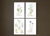 野の花のポストカード4種セット