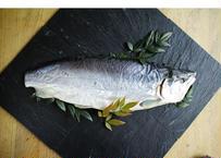 【食べるBOX】 お試し 塩引き銀鮭