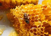 オンラインでやま学校しよう!    日本ミツバチのみつろうで♪  やさしいリップとクリームづくり