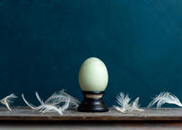 Bird egg specimen -アロウカナの卵標本-