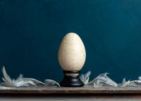 Bird egg specimen -七面鳥の卵標本-
