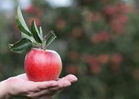 青森りんご・フジ 3kg