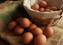 産直卵こがね/20個