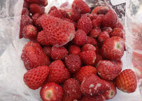 【いちご農家採れたて手作り】訳アリお得商品!冷凍いちご/あまりん・かおりん・紅ほっぺ・やよいひめ・とちおとめ混合2kg。1袋1kg×2個