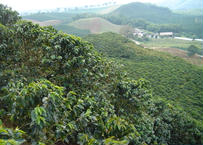 COLOMBIA F&O-donation beans-