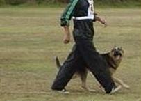 愛犬 1か月預かりトレーニング