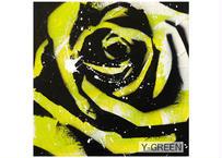 Paint Rose「穏やか」- Yellow green