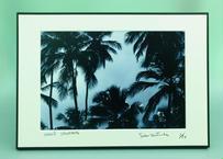 写真パネル<椰子の木漏れ日>直筆サイン付き 数量限定
