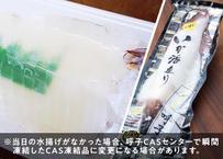 呼子剣先いか 活き造り(1杯 約220g)