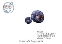 No.002 小さな苔取貝 x 10ぴき