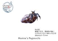 No.001🇯🇵小さなヤドカリMIX x 10ぴき