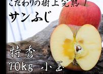 D6 サンふじ 10キロ箱 小玉 (40~46玉) 特秀(贈答用)