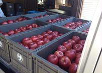 シナノスイート 特秀(贈答用) 5キロ箱 小玉(20~23玉)長野県産 りんご【食べ切りサイズ】