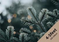 【予約販売】オレゴン産モミの木Oregon Abies Firma / 4-5feet / 120-150cm
